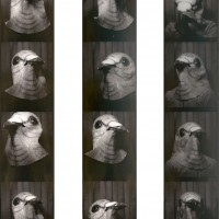 http://louisedeltrieux.com/files/gimgs/th-45_pigeonbooth.jpg